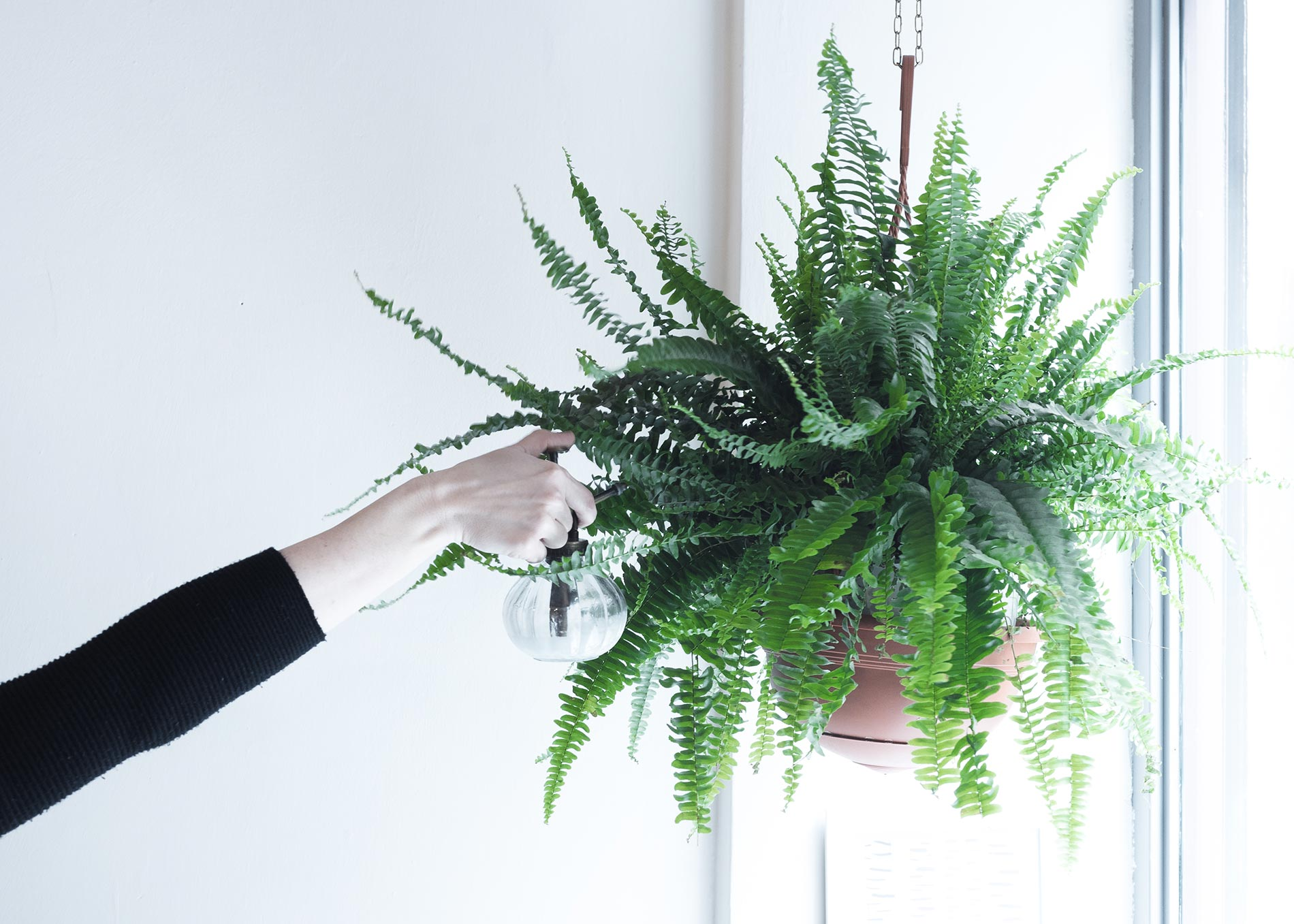 interior plant tips Bottega Botanica