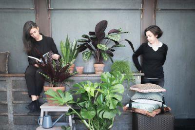 piante da interno consigli