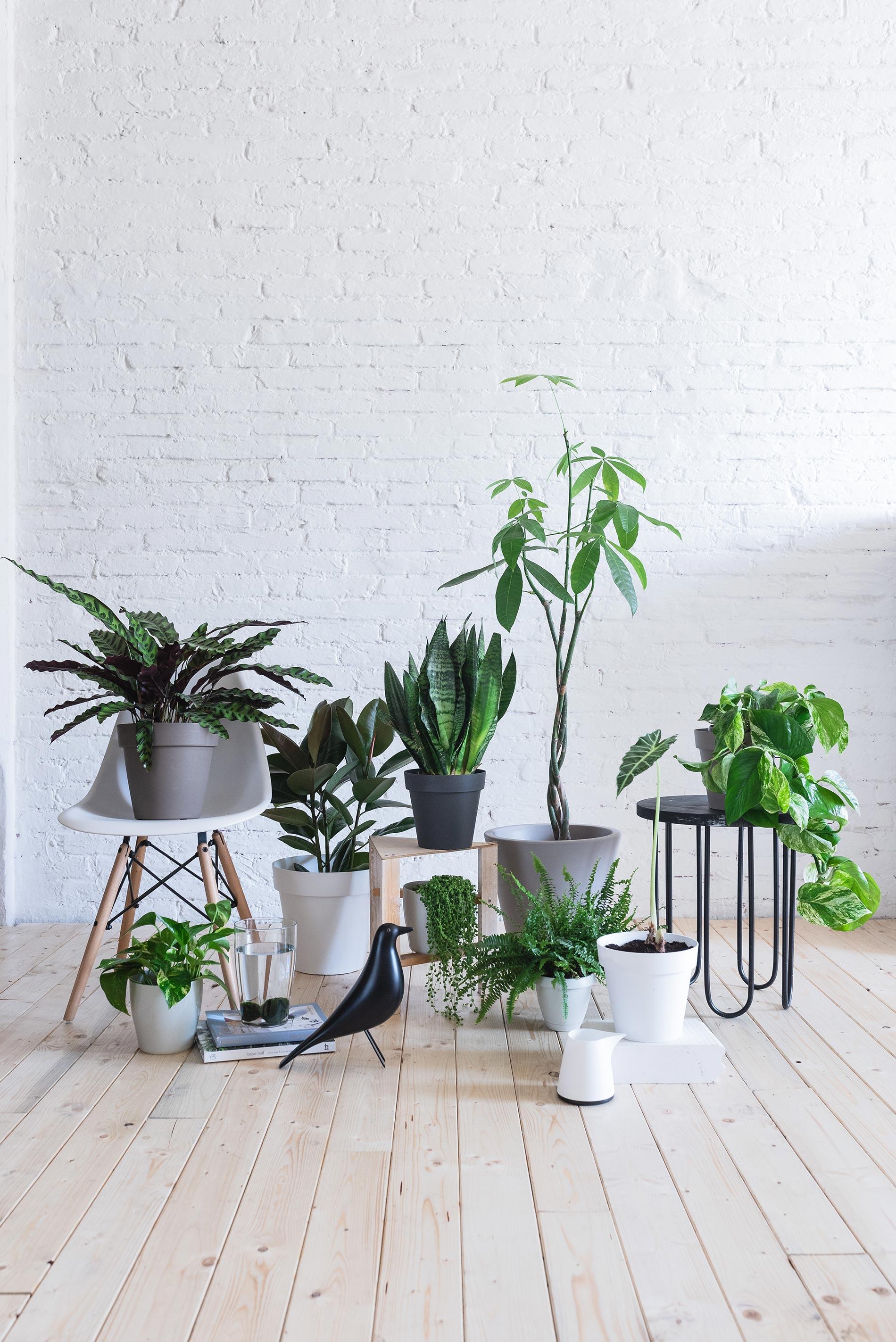 un salotto pieno di piante