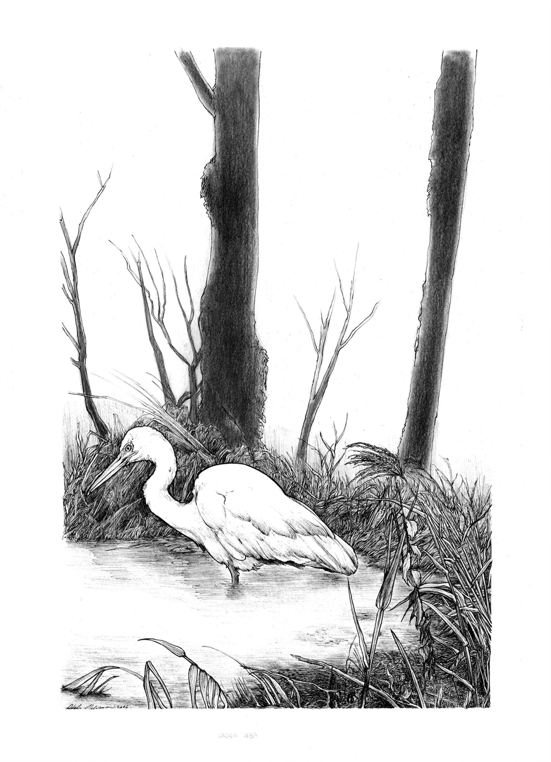 illustrazione botaniche Adele Pellizzoni