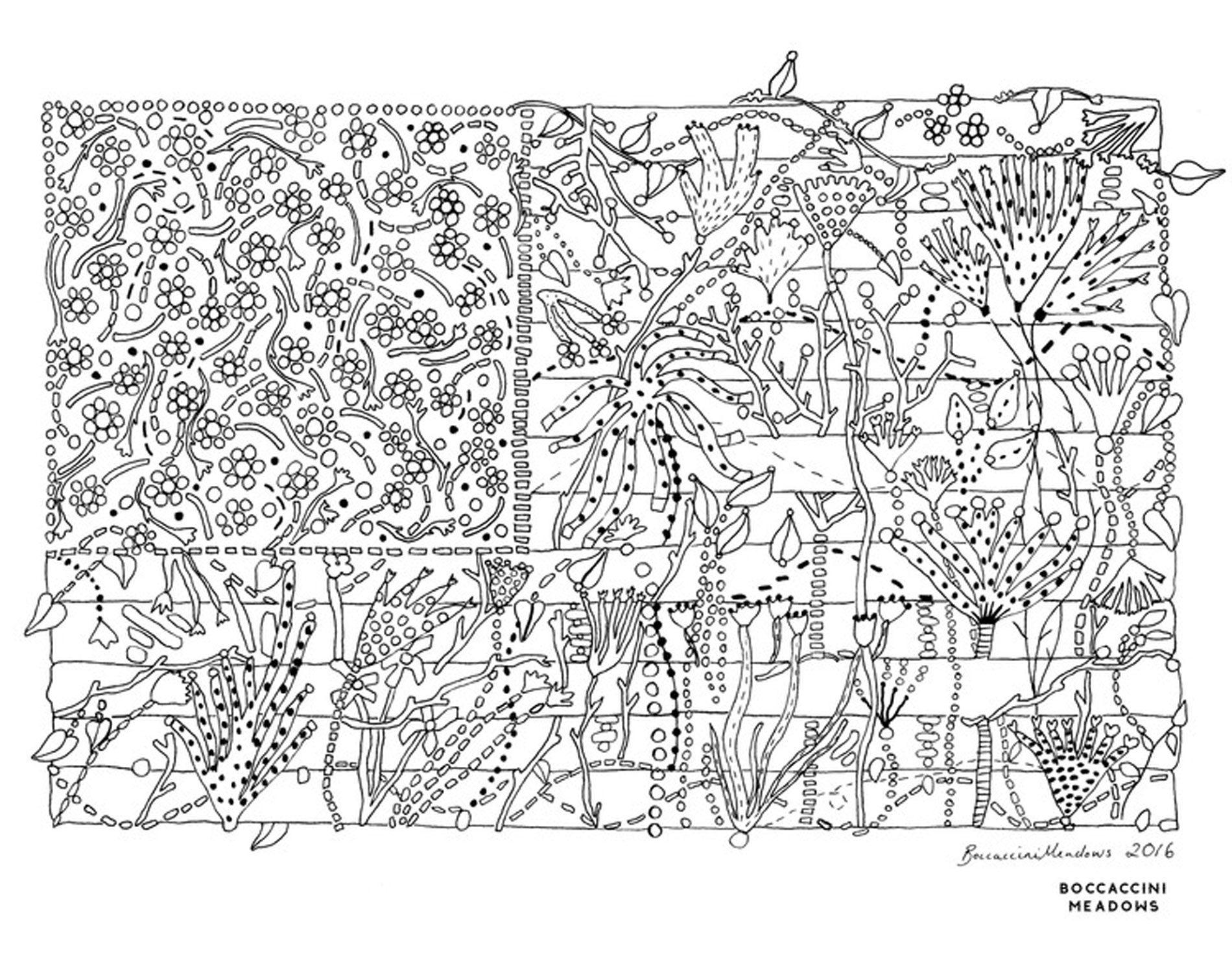 illustrazione botaniche Boccacini Meadows
