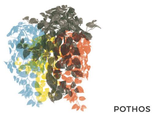 POTHOS | CONSIGLI E CURA