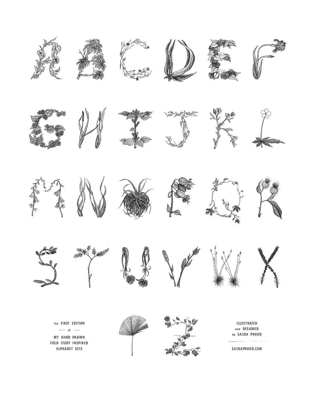 illustrazione botaniche Sash Prood