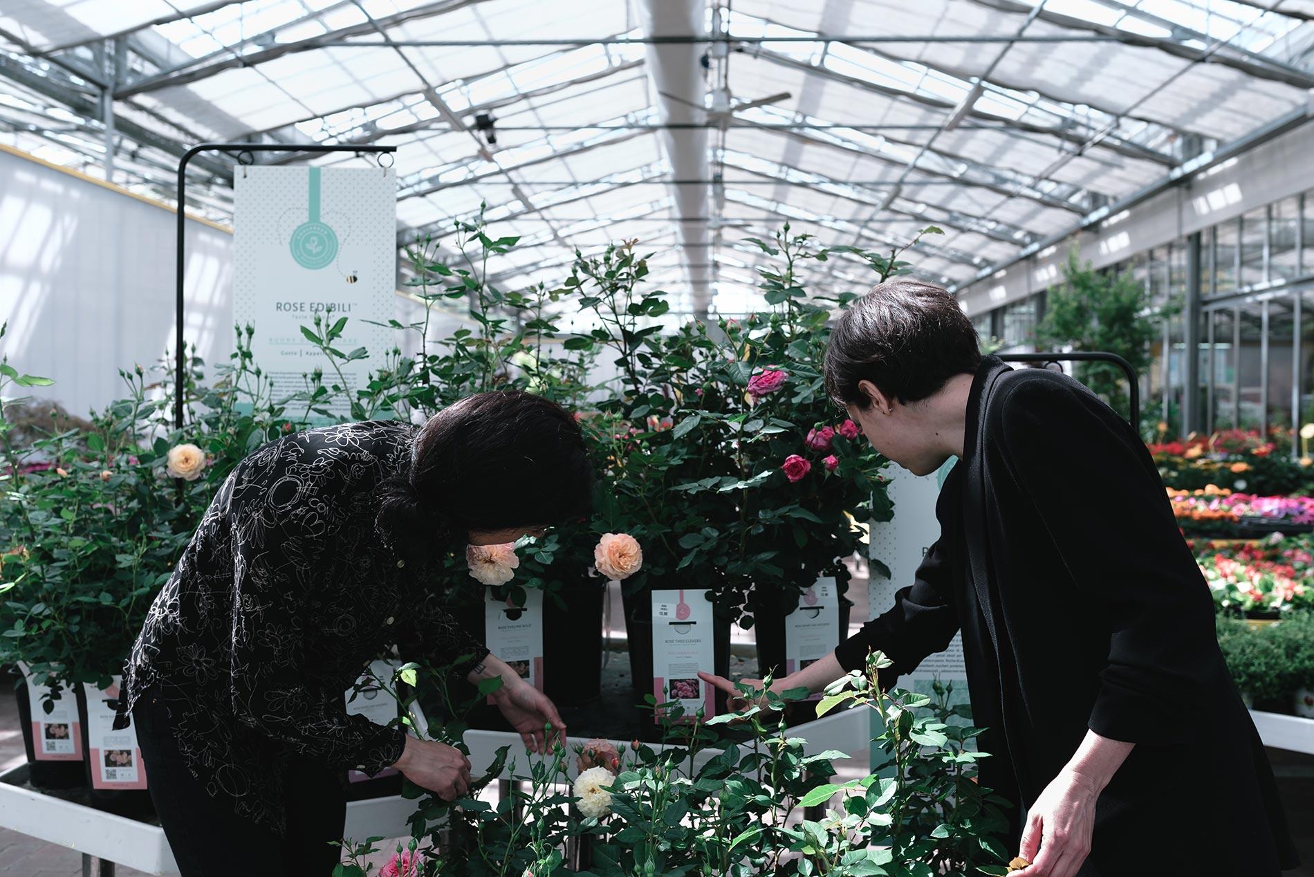 rose edibili consigli e cura