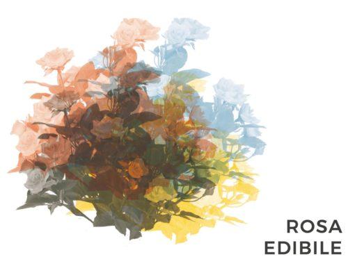 ROSA EDIBILE | CONSIGLI E CURA