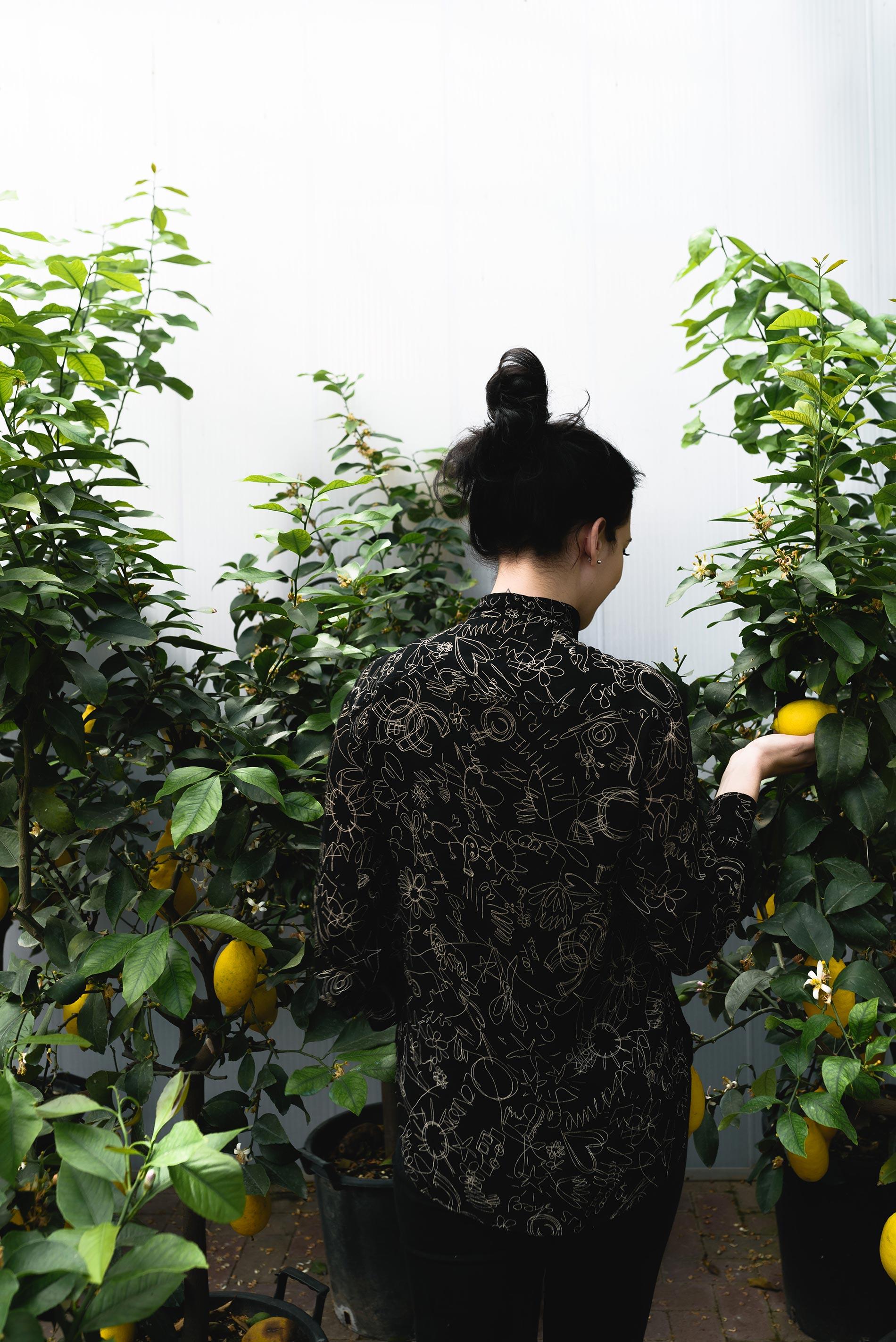 Pianta del limone consigli e cura