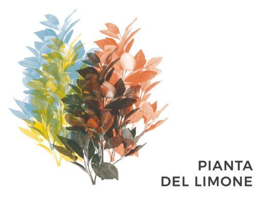 PIANTA DEL LIMONE | CONSIGLI E CURA