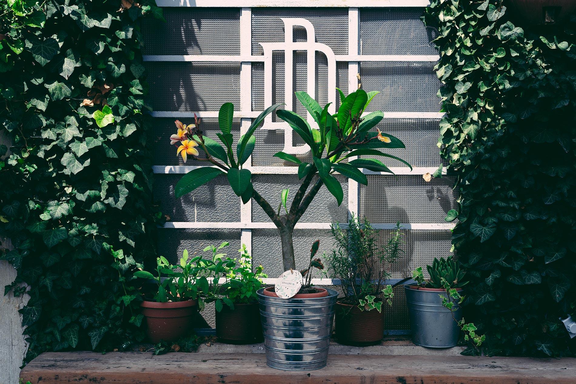 Piante Da Appartamento La Plumeria.Plumeria Consigli E Cura Unprogetto Progettazione E