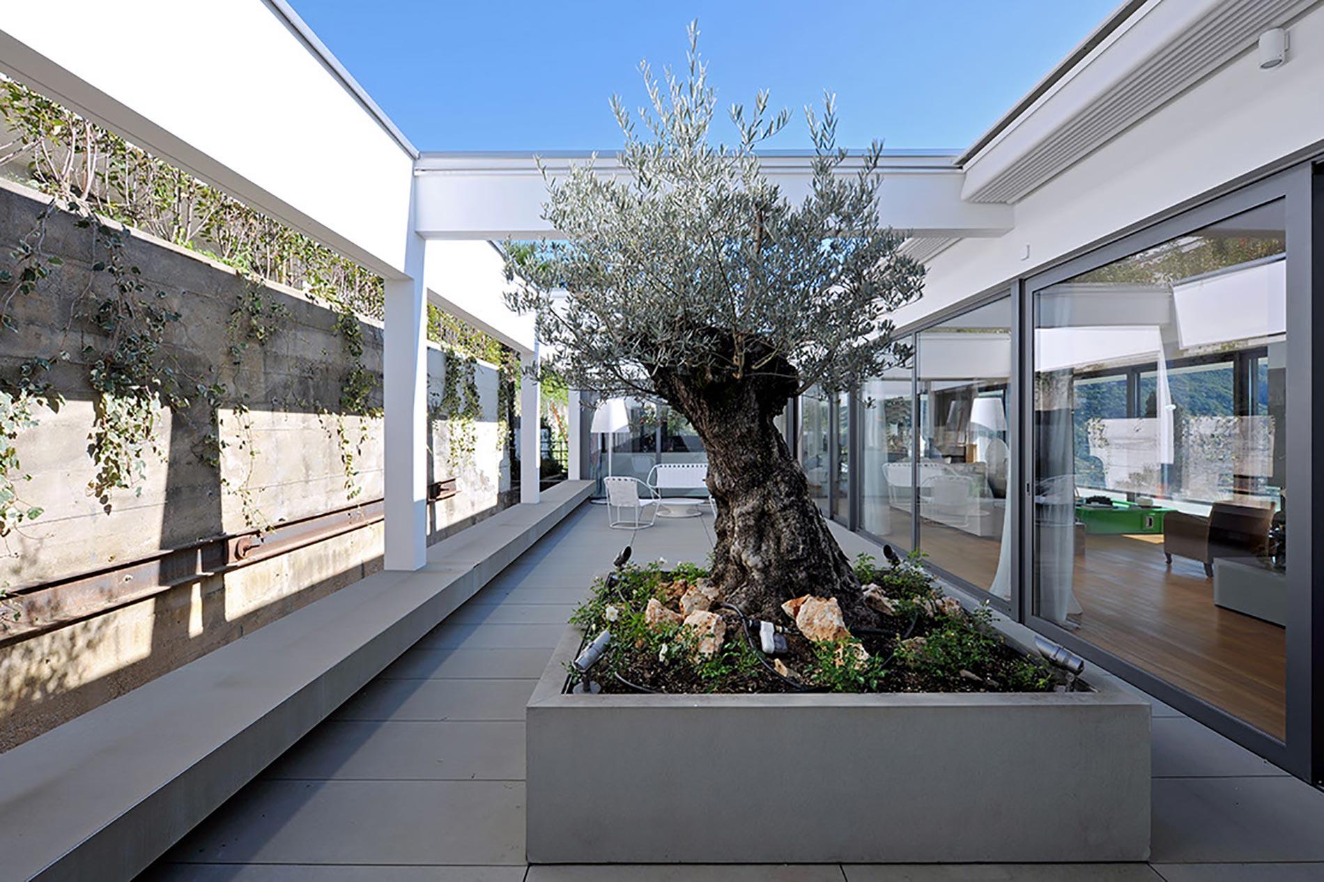 villa-lugano-antoniolupi---ingresso-albero
