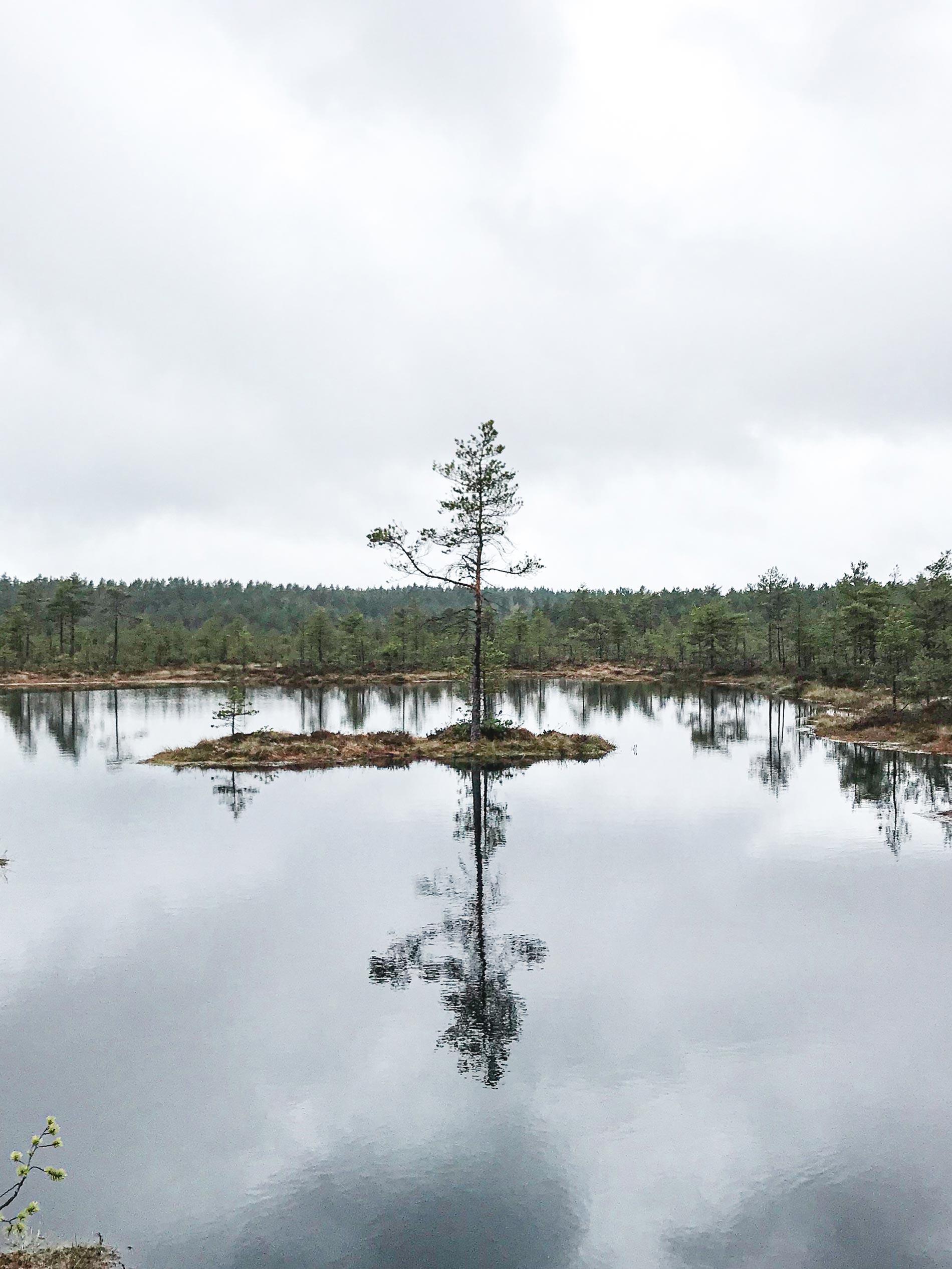 cos'è l'impiallacciato produzione balti spoon mohring group estonia
