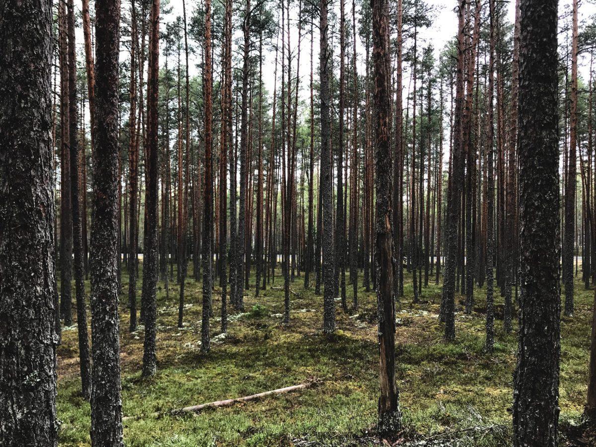 impiallacciato produzione balti spoon mohring group estonia