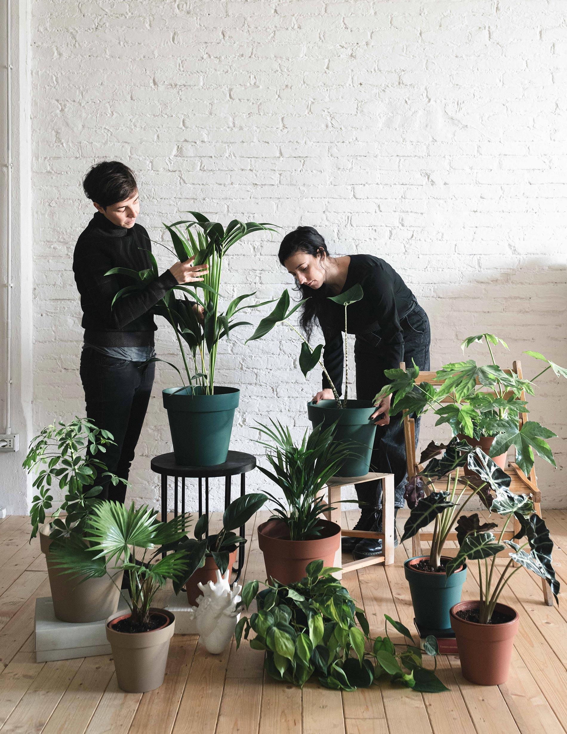 styling piante e case